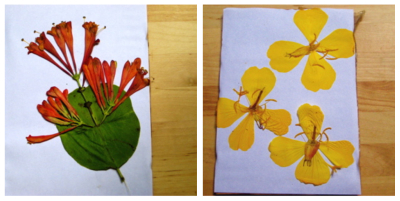 Flowerpress openstack sbs2