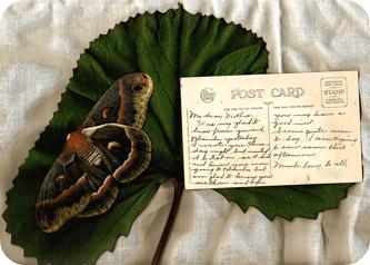 Postcardsfromthepastblanche7