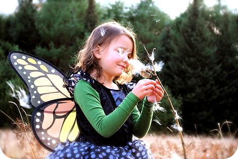 Butterflyonflower